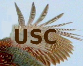 USC on the wing